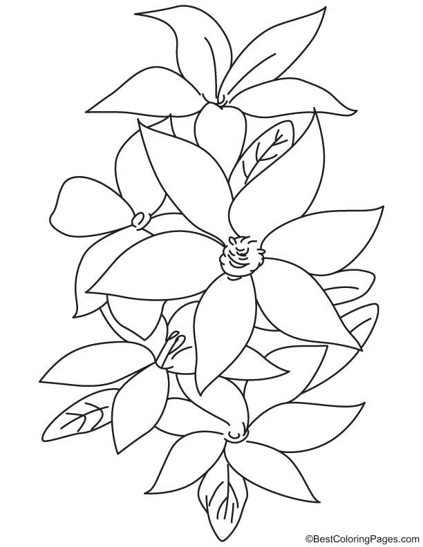 Lily Flowers Coloring Page