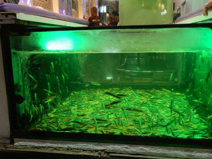 Fish Spas are everywhere in Hua Hin, Thailand