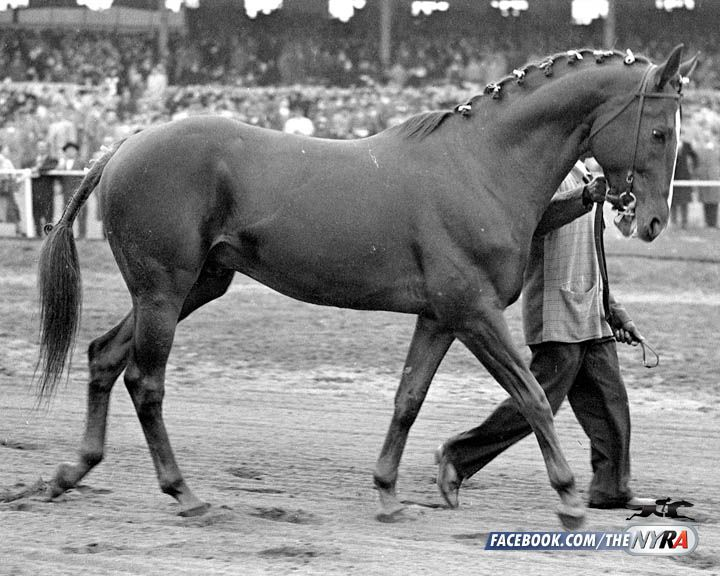 Stymie, horse racings greatest claim. 70 years ago, Hirsch Jacobs claimed 2 year old Stymie at Belmont Park for $ 1500. He went on to be the first horse to win $ 900,000. He's shown here at his retirement party in 1949.