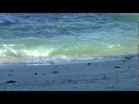 Meeresrauschen mit Möwen - YouTube
