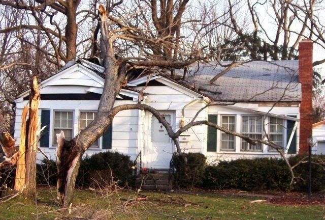 Why Emergency Tree Removal Service Is Better Than DIY