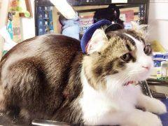 芦ノ牧温泉の駅長猫らぶさんです 会津鉄道の芦ノ牧温泉駅に実際にいる猫さんですよとっても可愛いといま大人気なんです()/ らぶ駅長はほとんど毎日駅で皆さんをお待ちしています 2017年カレンダーやLINEスタンプも販売していますよ 会津の奥座敷と呼ばれる芦ノ牧温泉のエリアはとても美しい自然を味わえる場所です ぜひ駅長猫らぶと会津の美しい自然を楽しみに芦ノ牧温泉駅までお越しください tags[福島県]