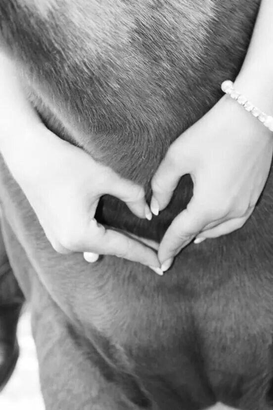 Heart on horse