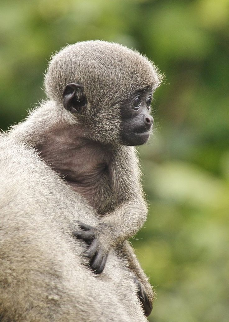 30 best images about Monkey World on Pinterest