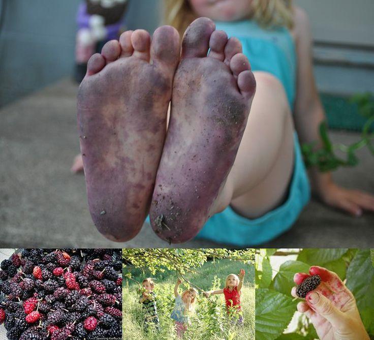 childhood / kinderdae / memories / remember this/ mulberry tree / moerbeiboom/ stained feet/ gevlekte voete/ purple/ pers