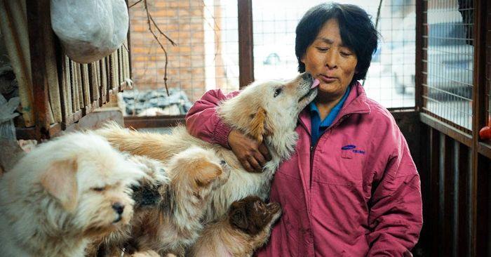 Yang Xiaoyun salva a 100 perros de una masacre durante un festival en Yulin, China que consiste en la masacre y el consumo de hasra 10,000 perros.