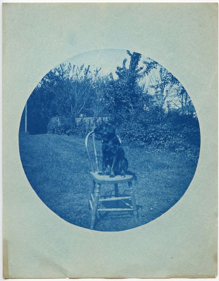 DOG SITTING ON A CHAIR GARDEN CYANOTYPE KODAK #2 VINTAGE SNAPSHOT PHOTO