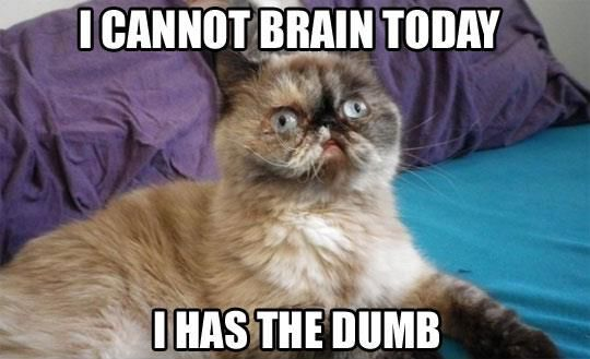 I cannot brain today - I has the dumb (hangover)