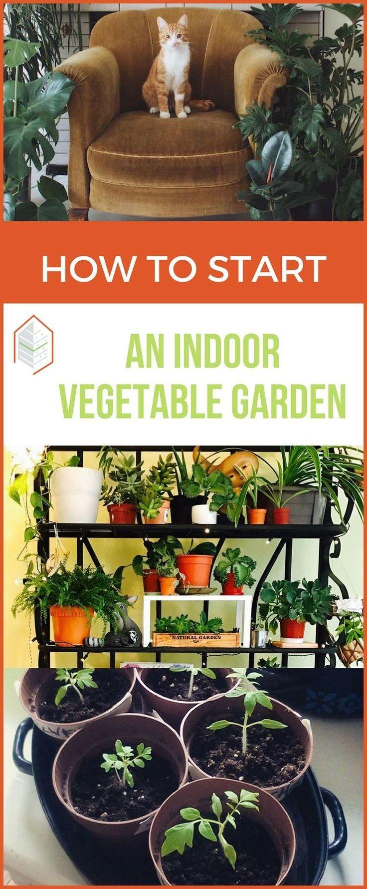Tips on how to start an indoor vegetable garden #fallvegetablegardening