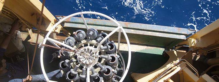 Biorremediación: tratamiento para océanos enfermos