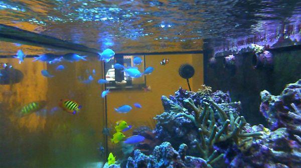 Home Aquarium Live Webcam See Blog New Websites