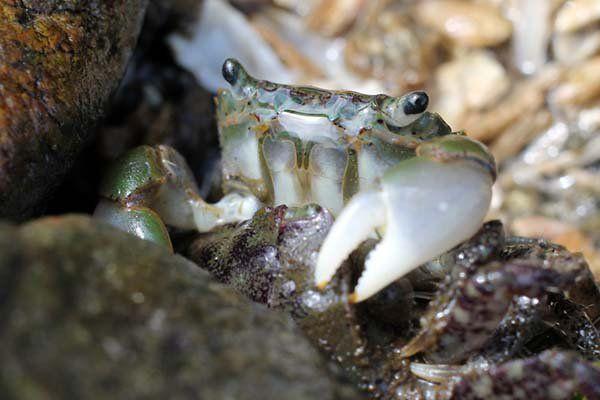 Prozac no mar: veja o que acontece com os caranguejos