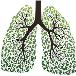The 9 Best Herbs for Lung Cleansing and Respiratory Support ––––– whether you're experiencing the negative effects of inhaling toxins, or simply want to ensure your lungs are always at peak performance, nature has provided a number of herbs and botanicals that provide deep nutrition for the respiratory system.