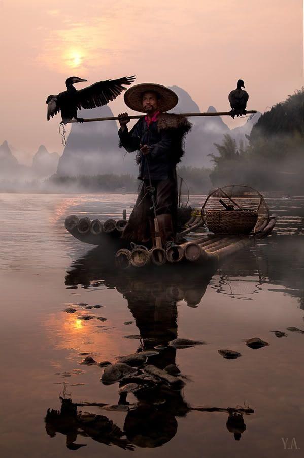 La pêche au cormoran sur la rivière Li, Chine