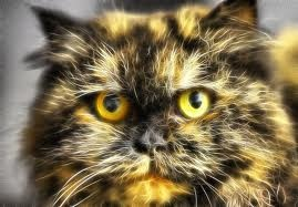 Unha gata que tiven hai anos.