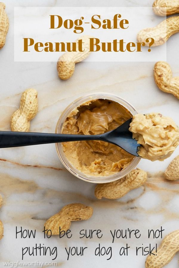 Can Dogs Eat Peanut Butter Is It Safe Dog Nutrition Dog Health