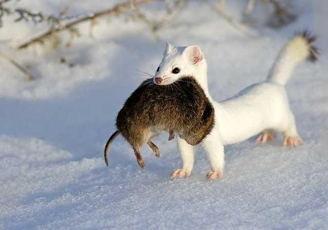 [Image: afbf8ceb82ec233e8566bf1984b36532--winter...trisha.jpg]