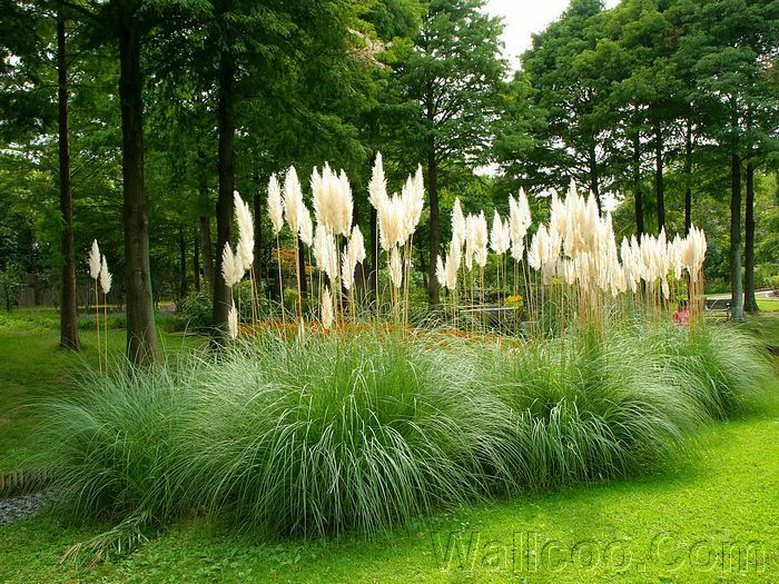 Great Japanese Landscaping Plants | Page 1 Japanese Garden Design Picture  V1223657122 2 Japanese Garden ... | Landscape Plants | Pinterest | Japanese  Garden ...