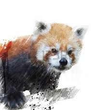 Image result for red panda painting