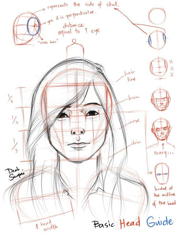 Character Design Proportions : Best portrait facial proportion images on pinterest