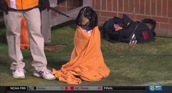 Smokey Huddled In a Blanket at the Tennessee Game, Was Adorable ...