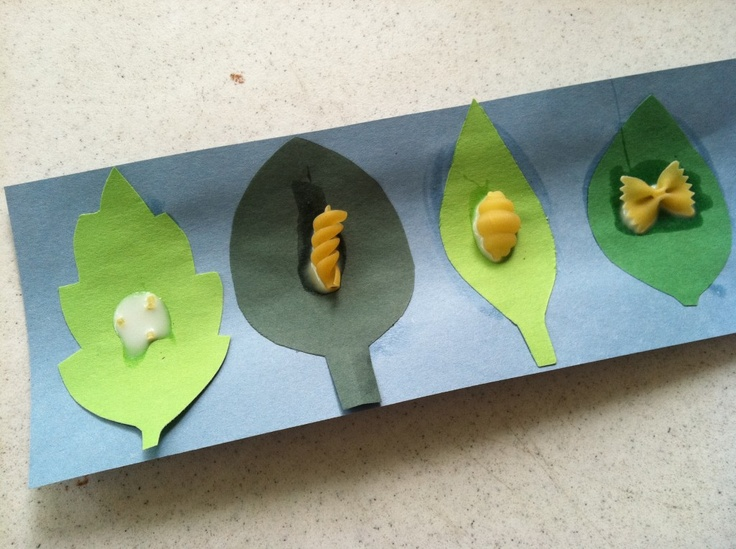 Butterfly life cycle- I used rice instead of noodles for the egg. I recommend using a paper plate divided into 4ths.