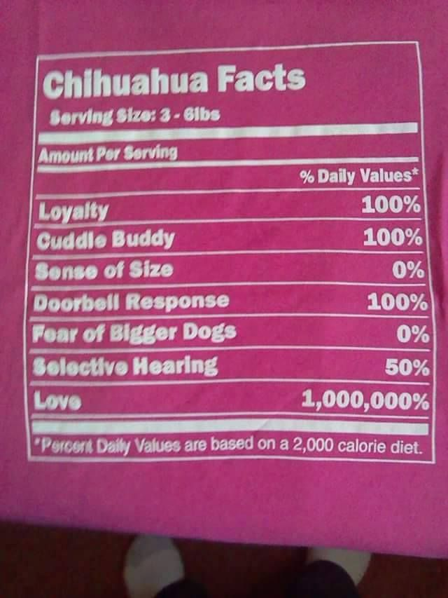 Chihuahua facts☺️                                                                                                                                                                                 More