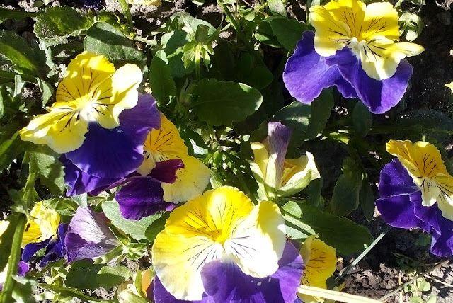 Mondások: Virágok nélkül - A Föld virágok nélkül olyan, mint az alvás álmok nélkül…