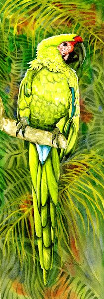 Military Macaw I - Christine Reichow Watercolor Artist - (239) 273-9568