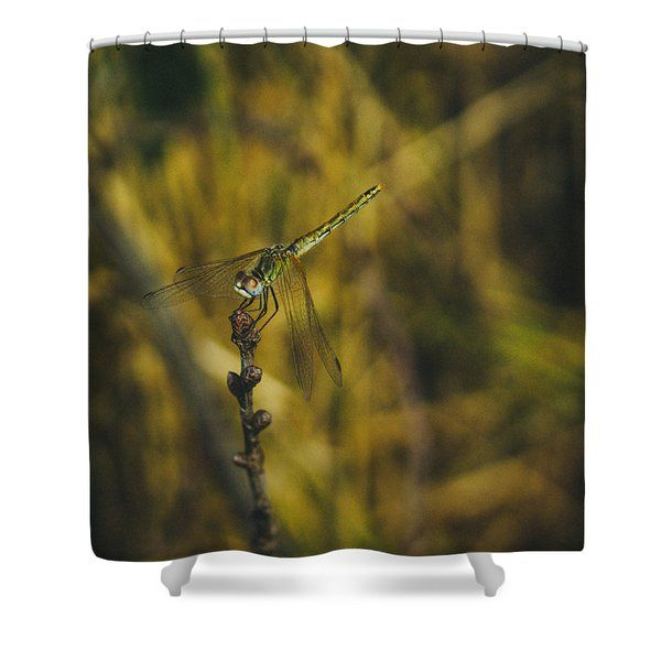 Golden Drangonfly Shower Curtain by Cesare Bargiggia