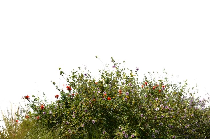 Wild Flowers With Grass 2 Stock Photo- 0081-PNG by annamae22.deviantart.com on…