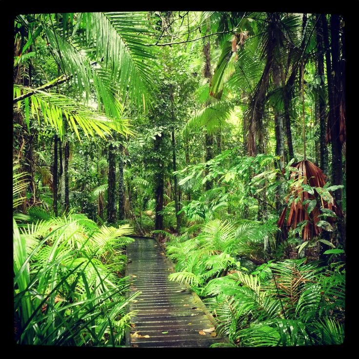 Magical rainforest Boardwalk, at the Cairns Botanical Gardens. Tropical North Queensland