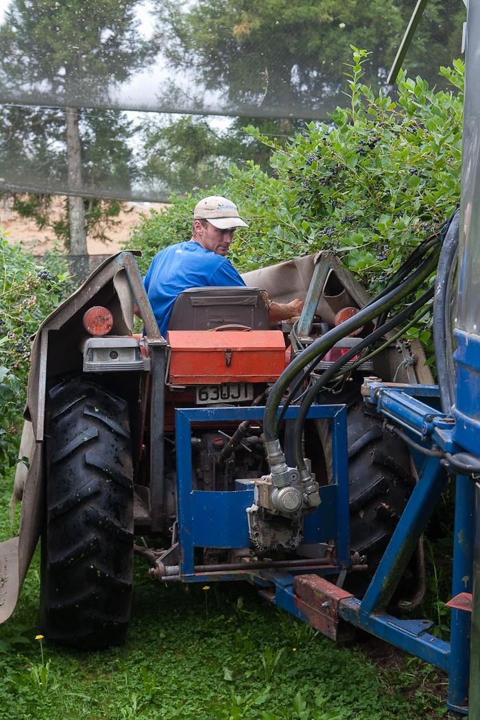 Hard at work for blueberry season - Mamaku Blue Blueberry Experience - www.mamakublue.co.nz