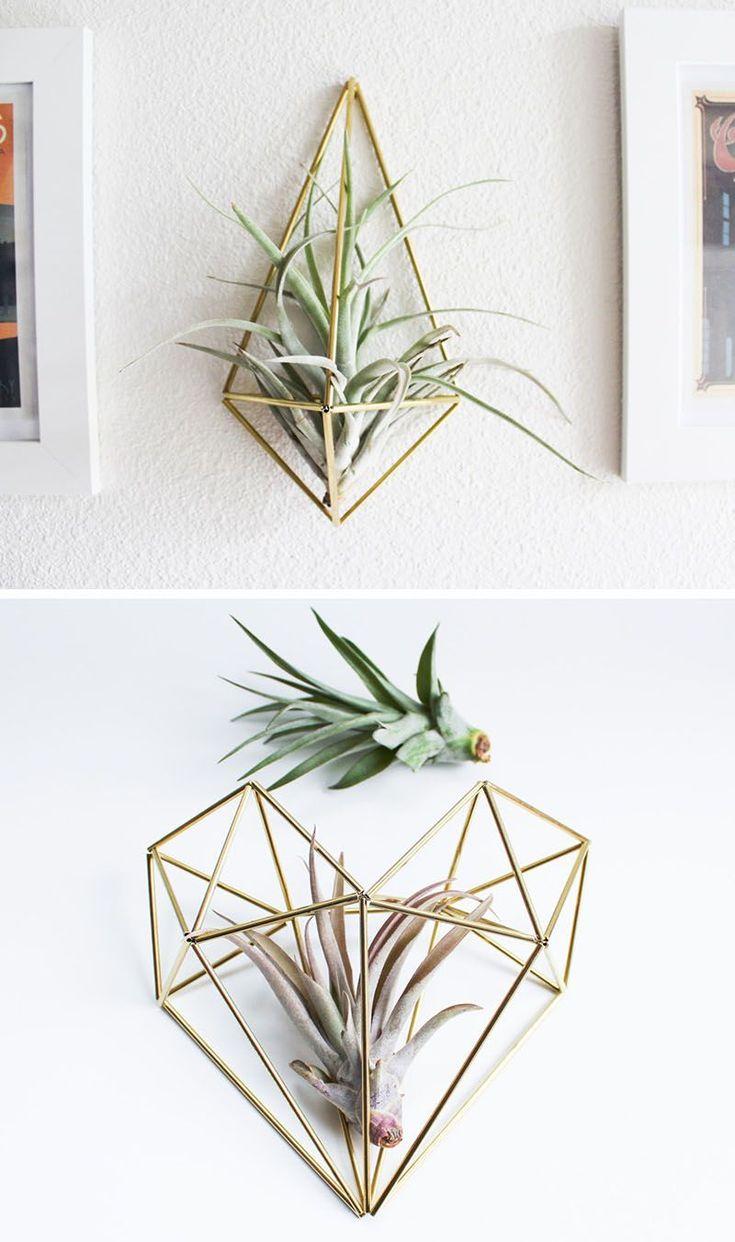 Best 25+ Hanging air plants ideas on Pinterest | Air plants, Hanging  terrarium and Terrarium plants for sale