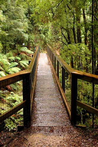 Bushwalk to Montezuma Falls - Tasmania, Australia