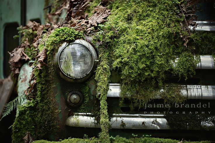 This old bus has seen better days. Although, Mother Nature has taken quite a liking to it. The windows are broken, it is coated in rust, but the moss has given it a new paint job, of sorts.