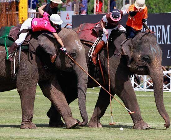 """Thailandia, sfida di polo """"in sella"""" agli elefanti"""
