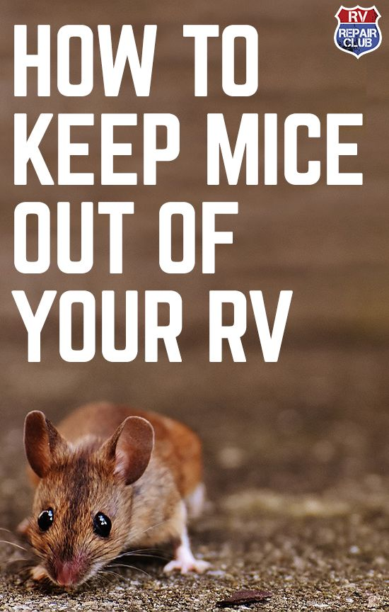 How to Keep Mice out of Camp