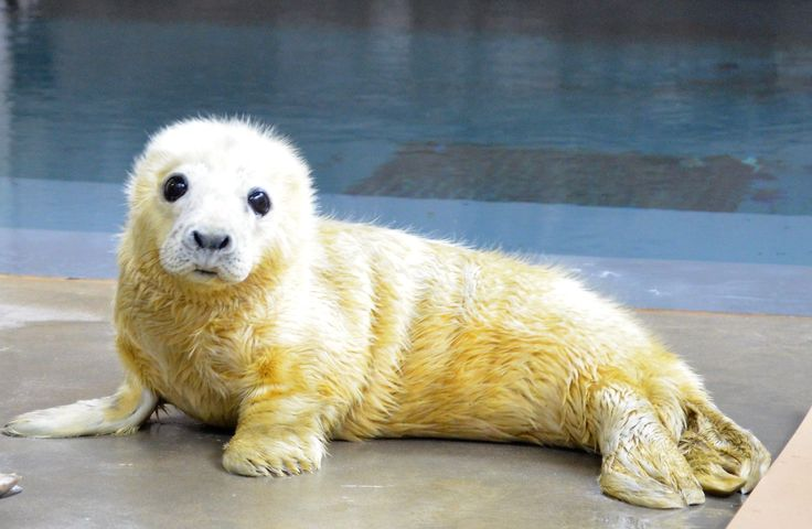 Seal pups vs red pandas, lions, and more.