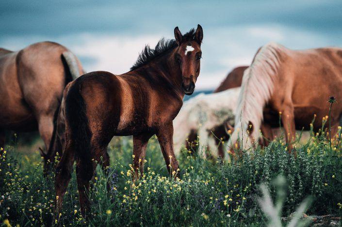 Fotos Pferde In Der Natur I In 2020 Mit Bildern Pferde