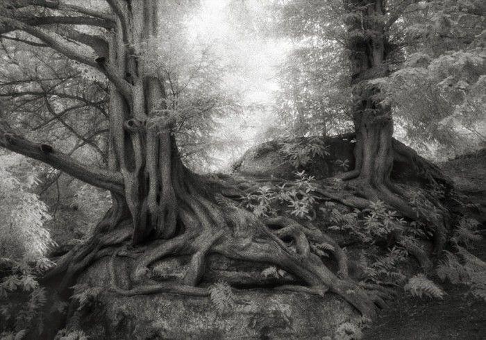 staroveke-stromy10