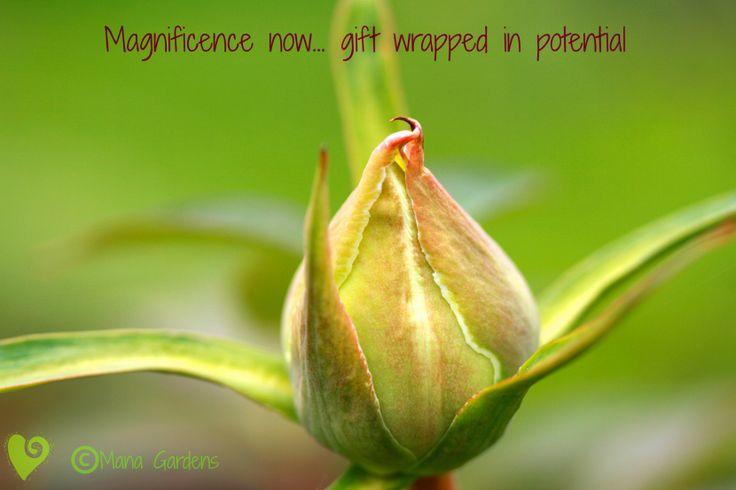 Inspiring words from Mana Gardens