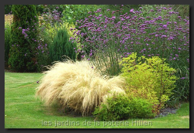 Stipa tenuissima & Verbena bonariensis, landscaping, ornamental grasses