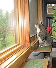 33 Best Images About Window Shelf On Pinterest Cats