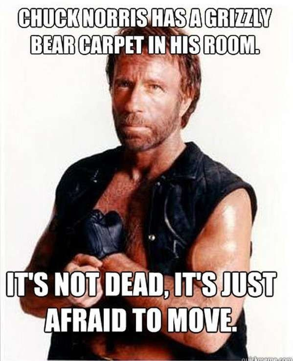 Chuck Norris Has A Grizzly Bear Carpet But He's Not Dead,  Click the link to view today's funniest pictures!
