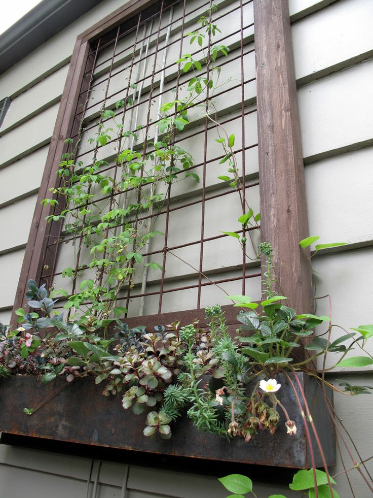 Trellis in a window box without a window - could use on side of patio or south side of house - could use as a wall for vines
