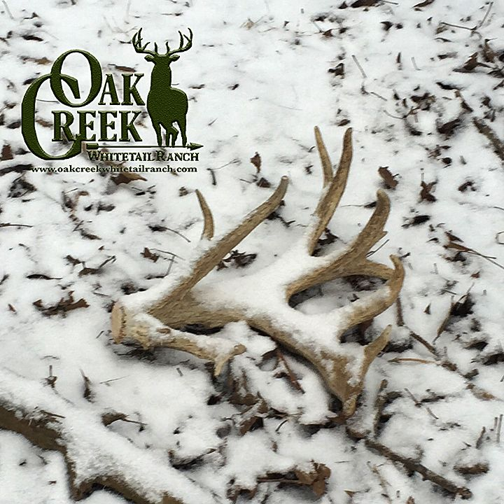 Big sheds in the snow. Are you finding any sheds in your area? #shedhunting #shedhunters