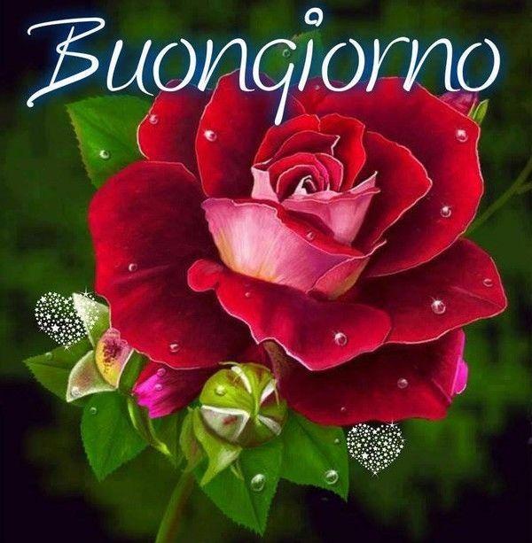 Un grand bonjour en italien bonjour bonsoir bon week for Foto per il buongiorno