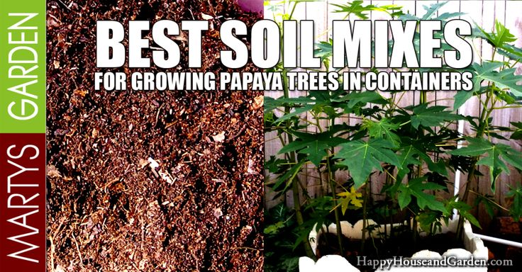 Best Soil Mixes for Growing Papaya Trees in Containers