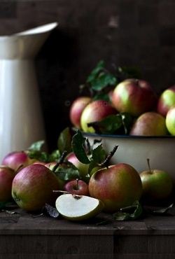 The apple is an ancient member of the extended rose family.  In this dark season a robust affection for apples, story, and kinship conjures up an earthly paradise...in the wide shade of a venerable rose-apple tree with fruit enough to feed a hungry world....Wendy Johnson